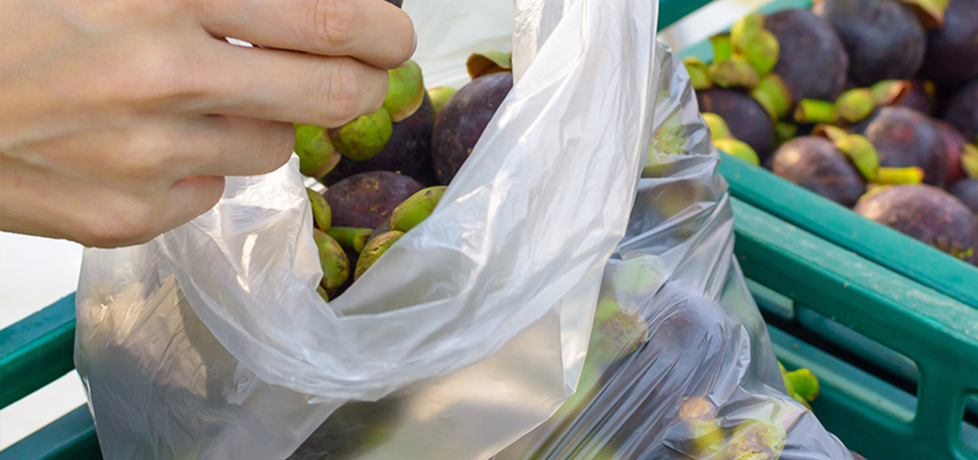 Why Choose The Biodegradable Bags of DMD Consult